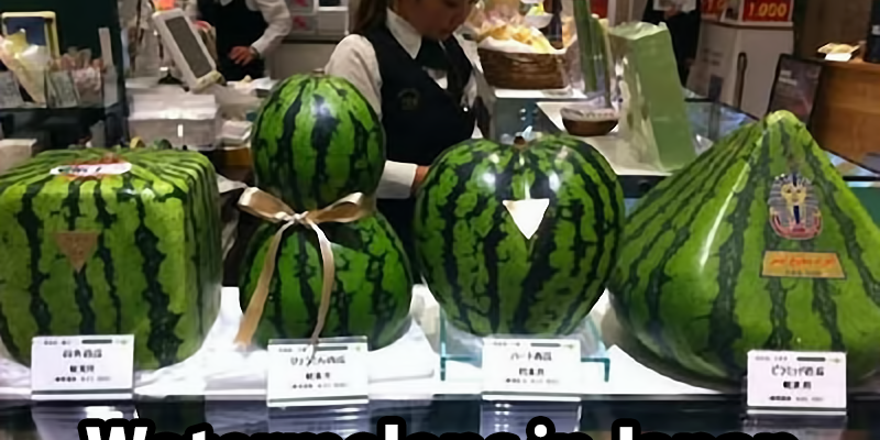 Japanese watermelons