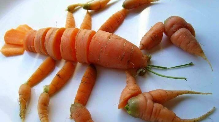 carrot lobster